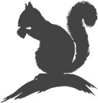 Gray Squirrel Silhouette
