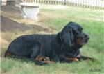 Gordon Setter watercolor