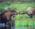 Alaska Scene 20