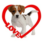 Jack Russell Puppy Love Heart