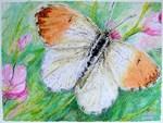 Arty Butterflies