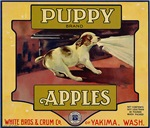 Puppy Apples