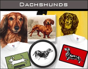 Dachshunds