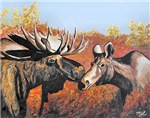Moose Love