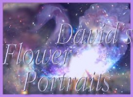 David's Flower  Portraits