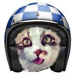 Biker Cat