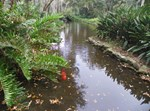 OLD FLORIDA FISH POND
