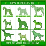 NATIVE DOGS OF IRELAND