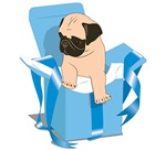 Blue Pug Present