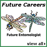 Future Careers