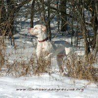 Hunting in the Snow-Lulu
