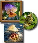 Nature / Flowers / Bugs