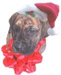 Brindle Santa Pup