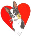 ~ BOSTON TERRIERS ~