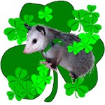 Lucky Irish Possum