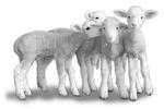 Whisper Lambs