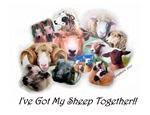 I've Got My Sheep Together