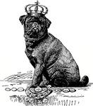 Vintage Black Pug Illustration