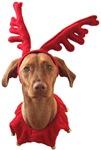 Vizsla Christmas Goodies!