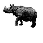Black Rhinoceros T-Shirts and Gifts