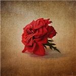 Miniature Red Rose III