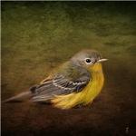Baby Warbler Bird