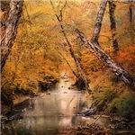 Autumn Riches 1