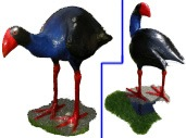 One Pukeko