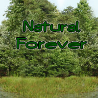 Nature Forever