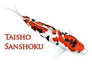 Taisho Sanshoku
