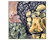 Lichens IV