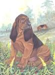 Bloodhound black/tan