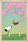 Woodstock Cherry Blossoms
