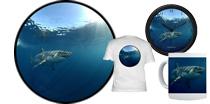 Underwater Great White Shark - Mexico