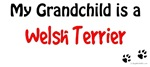 Welshie Grandchild