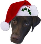 Christmas Labrador Retrievers