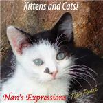 Kittens and Cat Gifts and Apparel