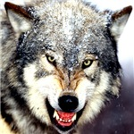 Wolf Section