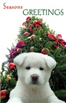 White Puppy Holiday
