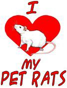 <b>I Love My Pet Rats</b>