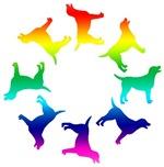 Rainbow Labs Circle