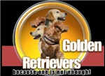 Golden Retrievers..because one is not enough!