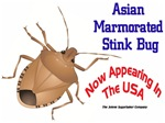 Stink Bug USA