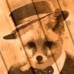 Fox In a hat