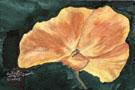 Arlene's Poppy