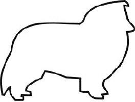 <h4>Shetland Sheepdog/Sheltie</h4>