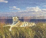 Tiger on the Beach