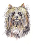 DOGS - Silky Terrier