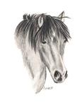 HORSES - Cheeky Pony