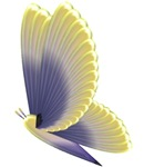 Yellow/Purple Butterfly